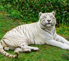 Pana`ewa Rainforest Zoo & Gardens