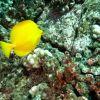 Extended Horizons Scuba Dive Maui